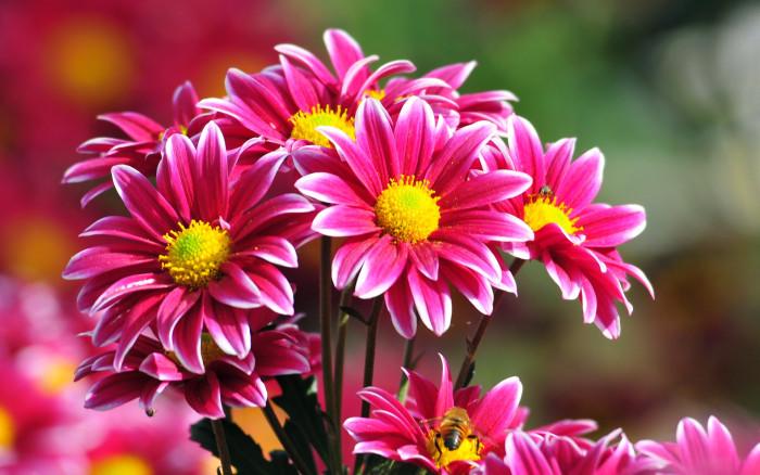 Flowers-07